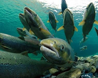 """Москву ждет """"Рыбная неделя"""" - AgroPages.Ru"""