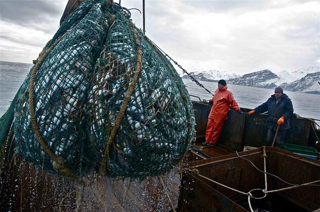 рыболовные фирмы петропавловск камчатский